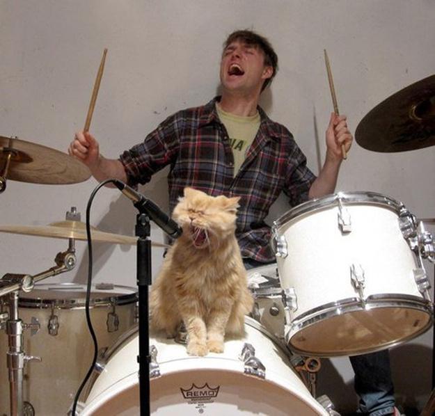 爆笑潮流猫猫演绎高中生生活