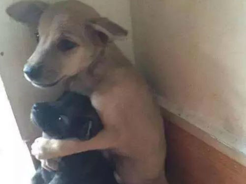 一对流浪狗露宿街头 互相拥抱相依为伴