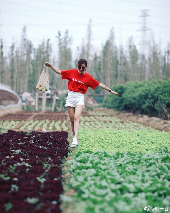 叶一茜采摘蔬菜活力满满 穿短裤大秀长腿